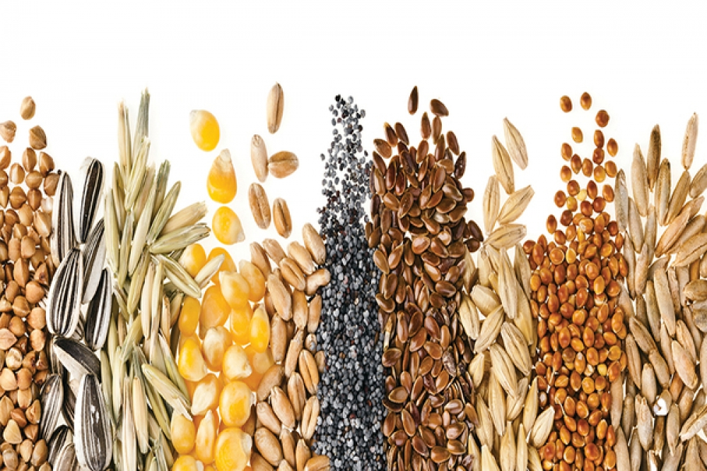 Cereals and Technical Plants